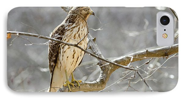 IPhone Case featuring the photograph Hawk On Lookout by George Randy Bass