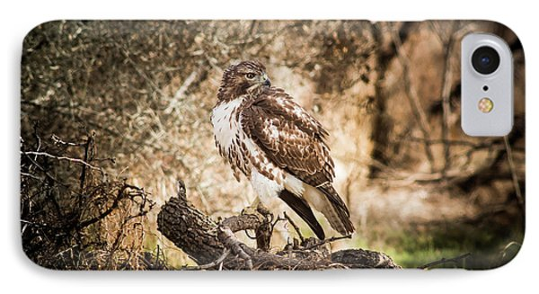 Hawk Through A Thicket IPhone Case by Robert Frederick