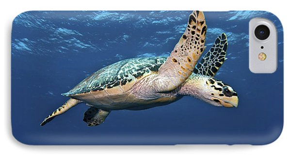 Hawksbill Sea Turtle In Mid-water IPhone Case by Karen Doody
