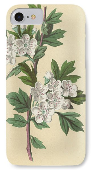 Hawthorn IPhone Case by Frederick Edward Hulme