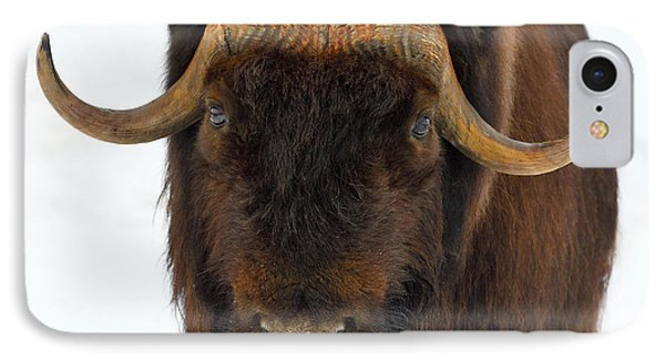IPhone Case featuring the photograph Head Butt by Tony Beck