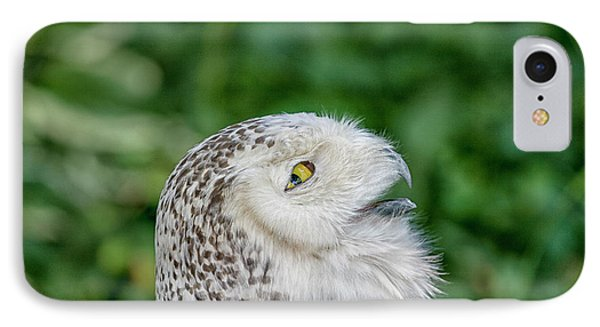 Head Of Snowy Owl IPhone Case by Patricia Hofmeester