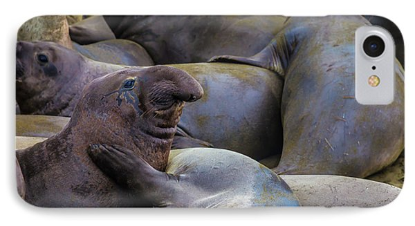 Heard Of Elephant Seals IPhone Case