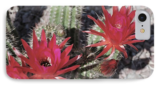 Hedgehog Cactus IPhone Case by Donna Greene