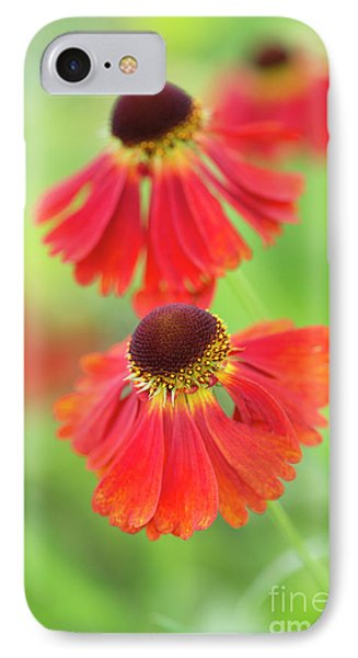 Helenium Moerheim Beauty Flowers IPhone Case by Tim Gainey