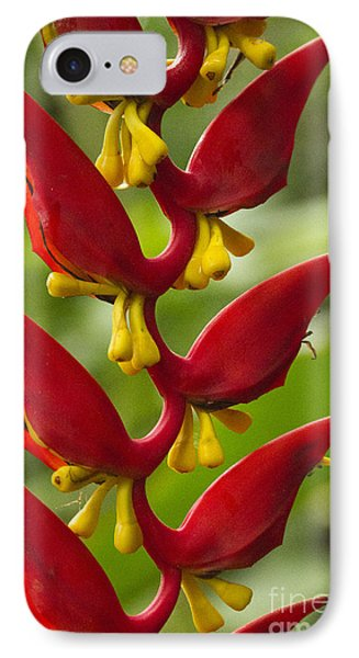 Heliconia Dielsiana Phone Case by Heiko Koehrer-Wagner