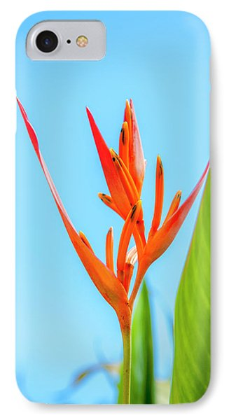 Heliconia Flower IPhone Case