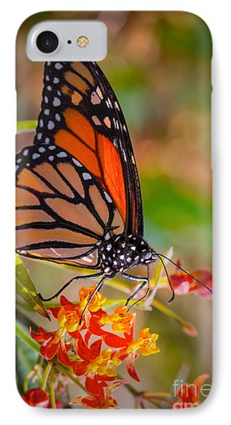 Hello Butterfly IPhone Case by Ana V Ramirez