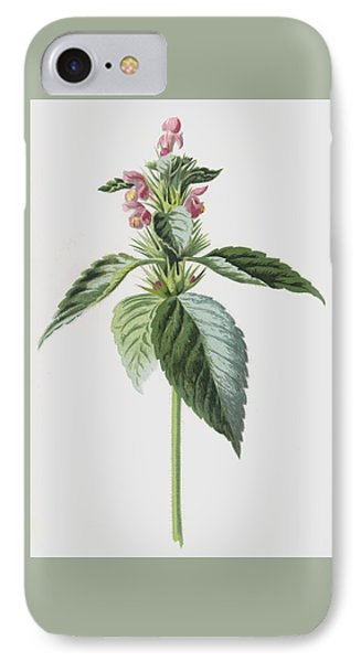Hemp Nettle IPhone Case by Frederick Edward Hulme