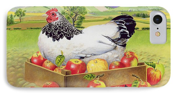 Hen In A Box Of Apples IPhone Case by EB Watts