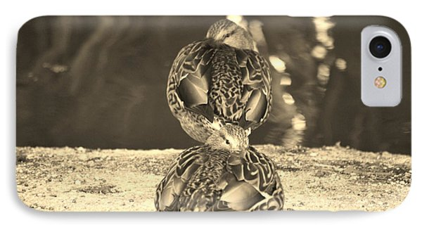 IPhone Case featuring the photograph Hen Mallard Ducks by Donna Greene