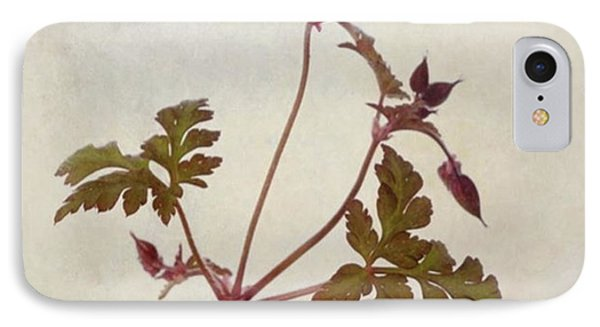 Herb Robert - Wild Geranium  #flower IPhone Case by John Edwards