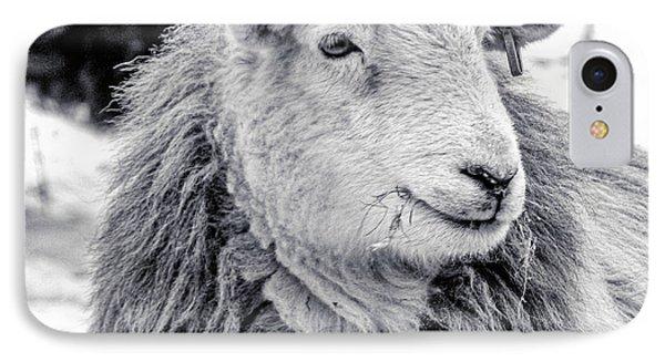 Herdwick Sheep IPhone Case