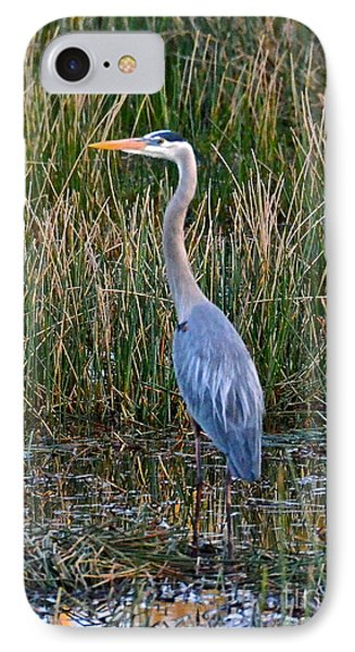 Heron At Sunset IPhone Case by Carol  Bradley