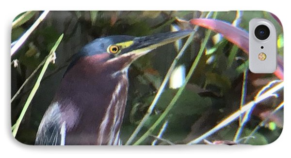 Heron With Yellow Eyes IPhone Case by Val Oconnor