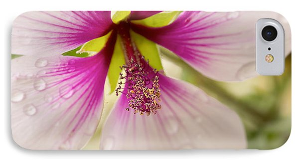 Hibiscus After The Rain IPhone Case