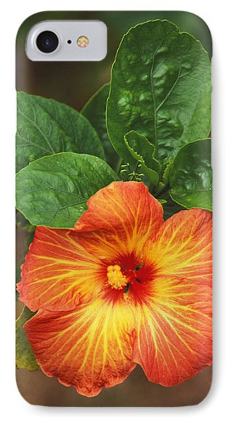 Hibiscus Phone Case by Allan Seiden - Printscapes
