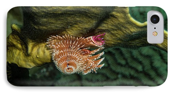IPhone Case featuring the photograph Hidden Christmastree Worm by Jean Noren