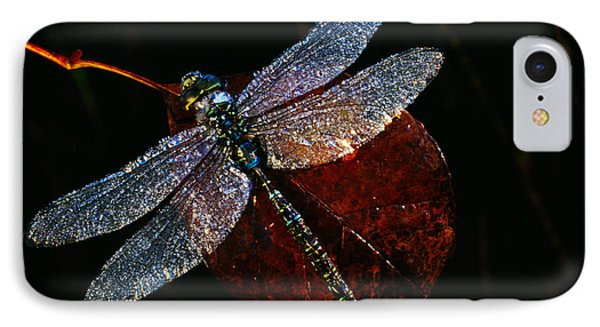 High Angle View Of Blue Darner IPhone Case by Panoramic Images