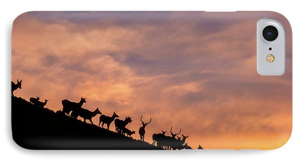 IPhone Case featuring the photograph Hillside Elk by Darren White