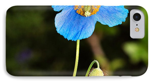 Himalayan Blue Poppy Phone Case by Louise Heusinkveld