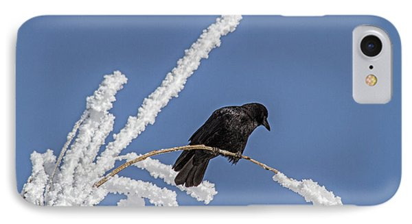 Hoarfrost And The Crow IPhone Case by Alana Thrower
