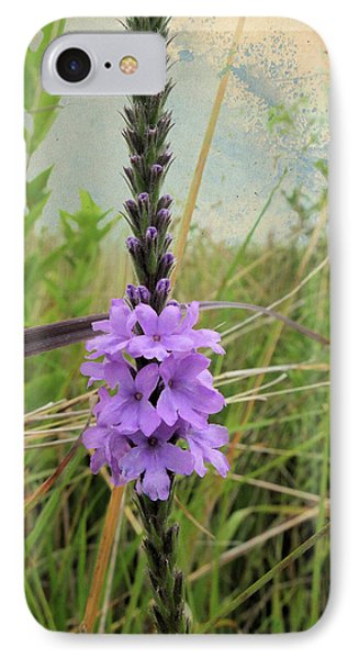 IPhone Case featuring the photograph Hoary Vervain by Scott Kingery