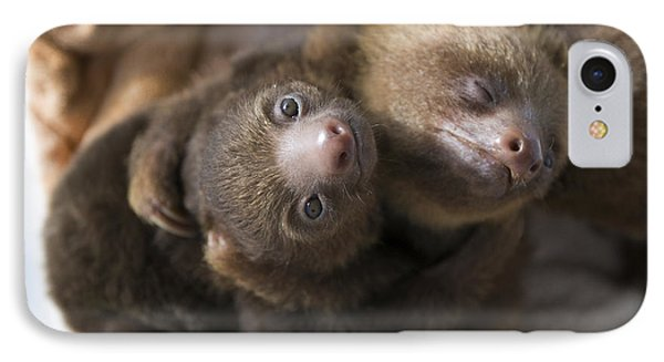 Hoffmanns Two-toed Sloth Orphans Hugging Phone Case by Suzi Eszterhas