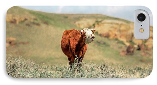 Hollerin' Hereford IPhone Case by Todd Klassy