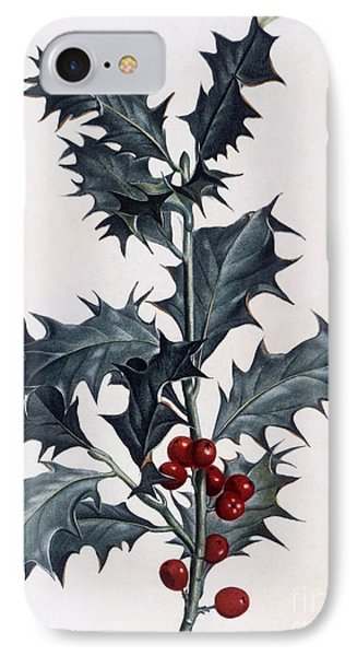 Holly IPhone Case by Pierre Joseph Redoute