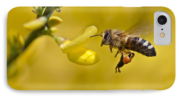 Honeybee Apis Mellifera IPhone Case