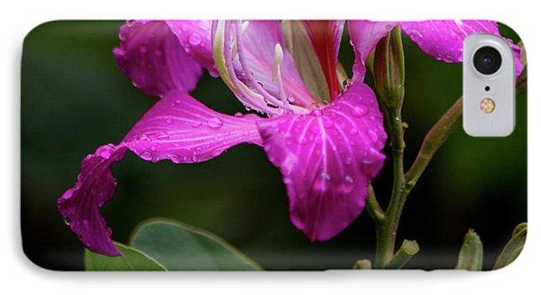 Hong Kong Orchid IPhone Case