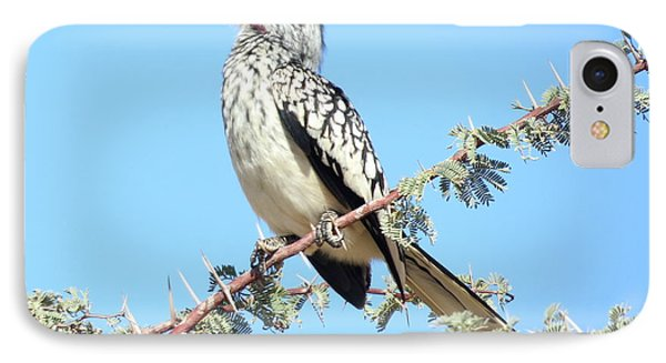 Hornbill In Thorn Tree IPhone Case