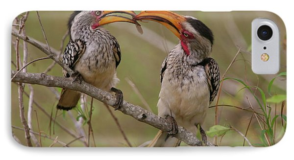 Hornbill Love IPhone Case by Bruce J Robinson