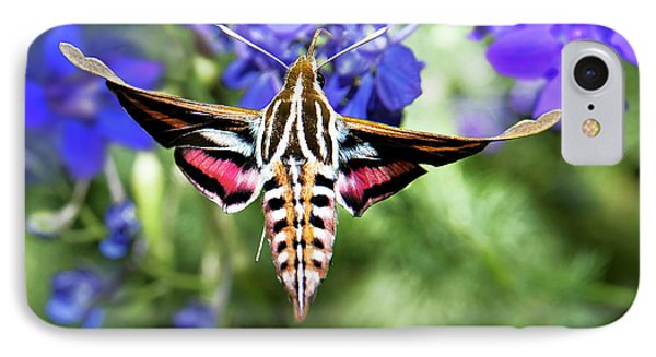 Horned Moth IPhone Case