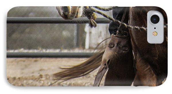 Horse In Hackamore IPhone Case