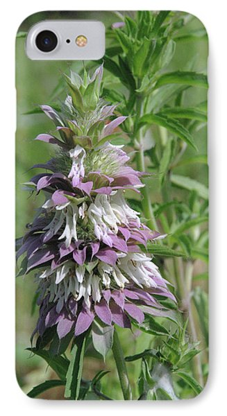Horsemint IPhone Case by Robyn Stacey