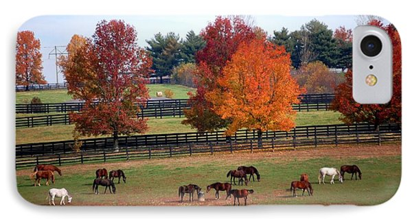 Horses Grazing In The Fall IPhone Case by Sumoflam Photography