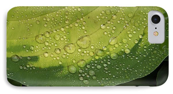 IPhone Case featuring the photograph Hosta Drops by Jean Noren