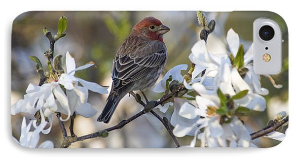 House Finch - D009905 IPhone Case by Daniel Dempster
