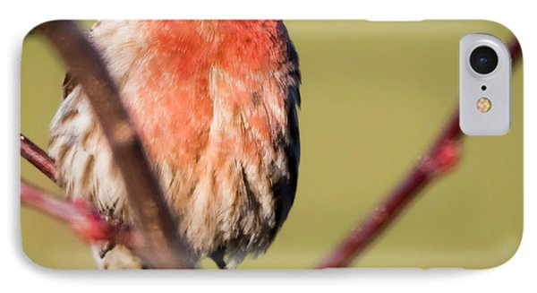 IPhone Case featuring the photograph House Finch In Full Color by Ricky L Jones