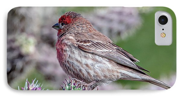 House Finch Male IPhone Case by Tam Ryan