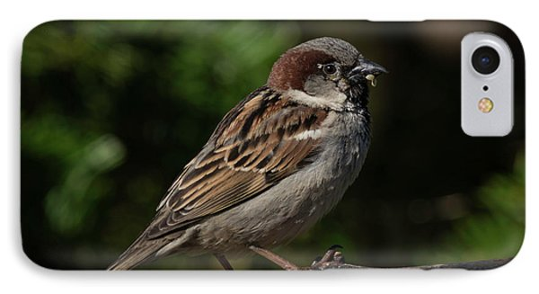 House Sparrow 2 IPhone Case by Kenneth Cole