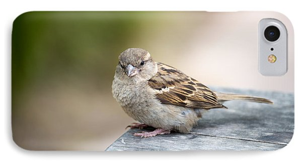 IPhone Case featuring the photograph House Sparrow by Scott Lyons