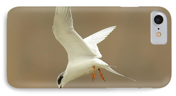 Hovering Tern Phone Case by Robert Frederick