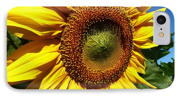 Huge Bright Yellow Sunflower IPhone Case by Tina M Wenger