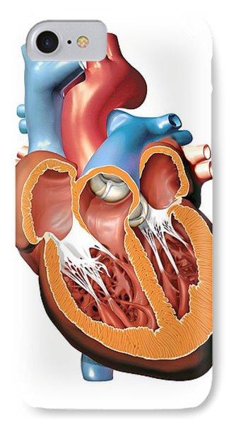 Human Heart Anatomy, Artwork Phone Case by Jose Antonio PeÑas