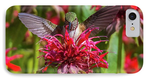 Hummingbird At Eagles Nest IPhone Case