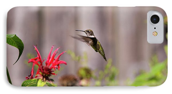Humming Bird Hovering IPhone Case by David Stasiak