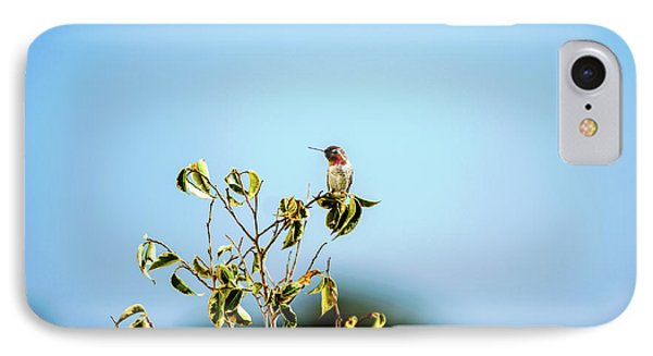 Humming Bird On A Branch IPhone Case by Micah May